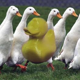 Cute Duck 3D